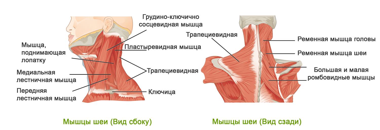 Как сделать синяк на теле вшопе